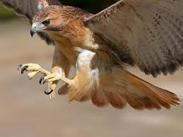 image hawk